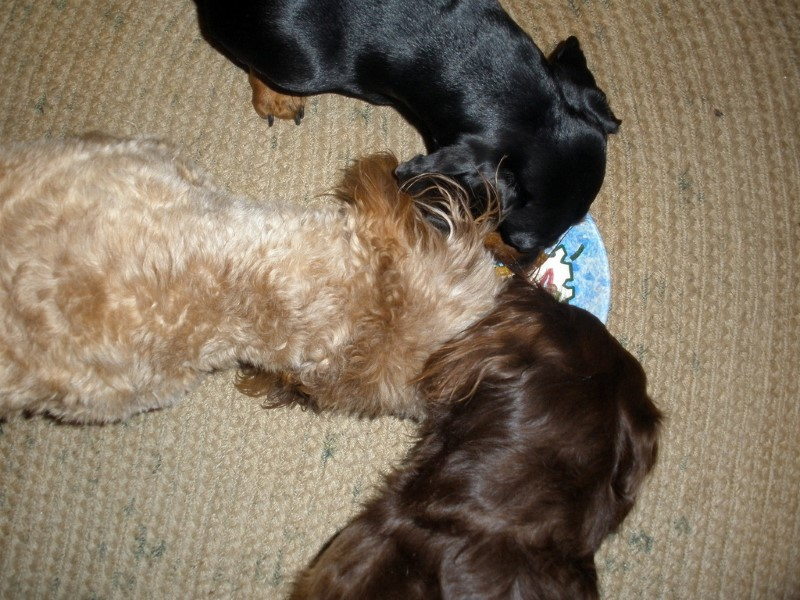dogs-with-treat
