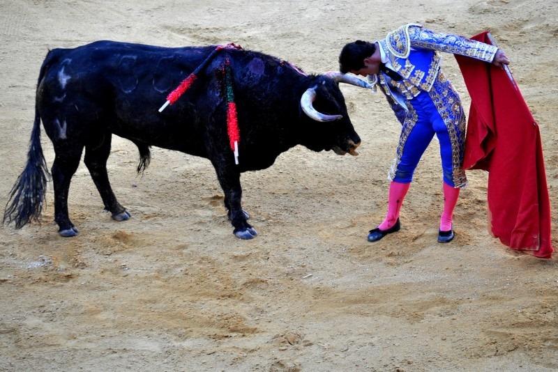 matador-and-bull